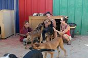 מתנדבים בצער בעלי חיים רחובות מטפלים בכלבים