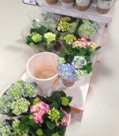 Bloemen binnenkort bij ons in de webwinkel