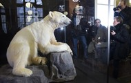 Come visit our display of Polar bears in our amazing museum