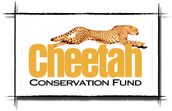 What Conservative Efforts Are Being Taken By Society To Save The Cheetah?