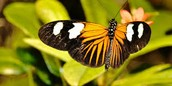 there are butterflies across the world that are diying