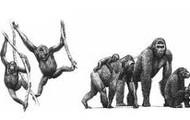 Especies de antropoides