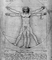 Vitruvian Man, Study of Proportions