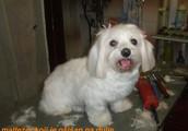 Svi tretmani za pse u Salonu No1 jeftiniji 40%