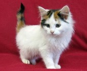 Adopt the cutest cats and kittens!