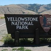 Hiker Killed By Bear At Yellowstone National Park