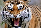 Exotic animals could turn on you!