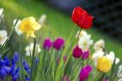 Marzo, Abril, and Mayo:  la Primavera