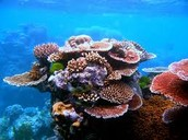 Ocean Acidification Lab