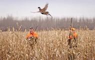 Me gusta caza