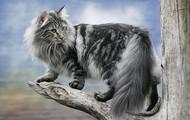 Finnish Cat