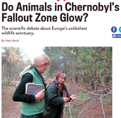 Do Animals in Chernobyl's Fallout Zone Glow?