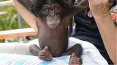 Neglected Baby Chimp