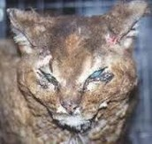 This cat was brutally beaten