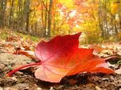 Es en el otoño.