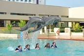 Let's go to Delphinus Dreams Cancun!