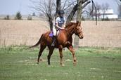 Yo monto al caballo.