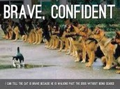 Braveness