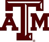 Texas A and M augies