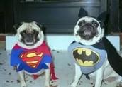 כלבים מצחיקים