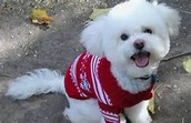 our shop sells name brand clothing for your pet
