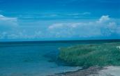 Threats to our North Carolinian estuaries!