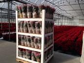 The Non-Returnable Flower Plant Shipper!