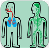 Systems of the Human Body Science Game