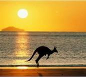 One of Australia`s Animal`s