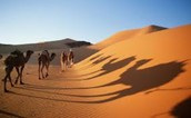 Camels and Sand