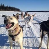 Ryne Olson's dogs ready to race