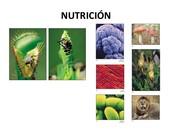 Nutrición :