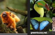 Animals In The Amazon Rainforest