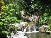 HONDURAS RAIN FOREST
