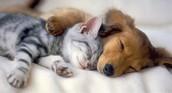sleep on a pertty day!!!