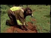 Wangari Maathai planting trees