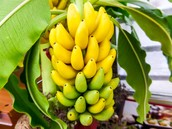 Banana. ... Orchid. ... Coffee. ... Brazil Nut Tree. ... Poinsettia. ... Cacao. ... Rubber Tree. ... Heliconia.