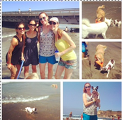 Happy 1st Birthday to Winnie, Brittany's dog.(: