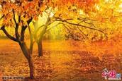 מידע על עונת הסתיו