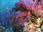 Australia the amazing reef