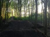 Het bos.