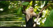 Monos volvieron poner en peligro.