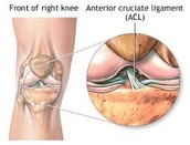 Where is the ACL? What does it do?