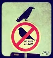 No Keeping Birds