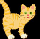 The New Cat