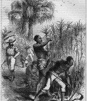 Working in Sugar Cane Fields, 19th cent.   Source: Edmund Ollier, Cassell's History of the United States (London, 1874-77), Vol. 2, p. 493