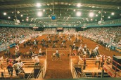 You can visit the Mesquite Rodeo!