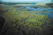 The importance of Estuaries??