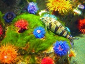 More! anemones!