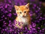 Hi I LOVE flowers
